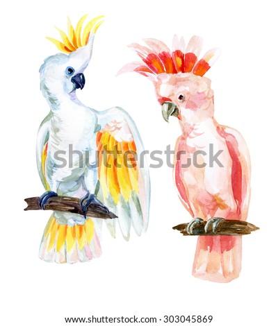watercolor Australian Cockatoo set, hand painted illustration of parrots - stock photo