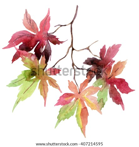 Watercolor autumn branch with colorful leaves. Japanese maple leaves isolated on white background. Hand painted autumn garden illustration  - stock photo