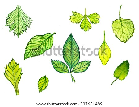 watercolor background green leaves