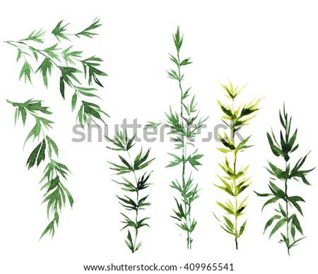 watercolor bamboo leaves - stock photo