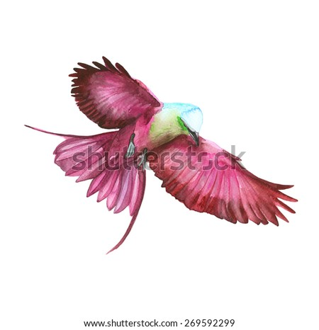 Watercolor beautiful pink-purple bird in flight on a white background - stock photo