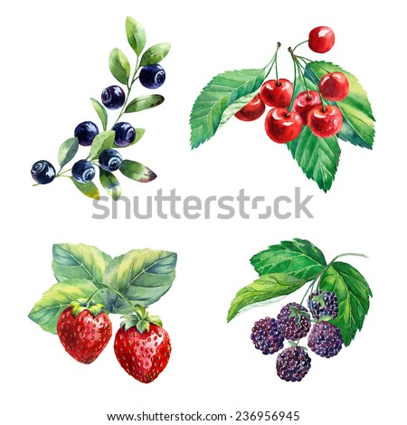 watercolor berries on white background - stock photo