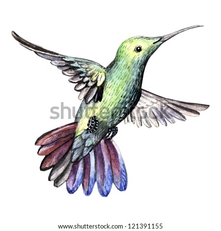 watercolor bird hummingbird - stock photo