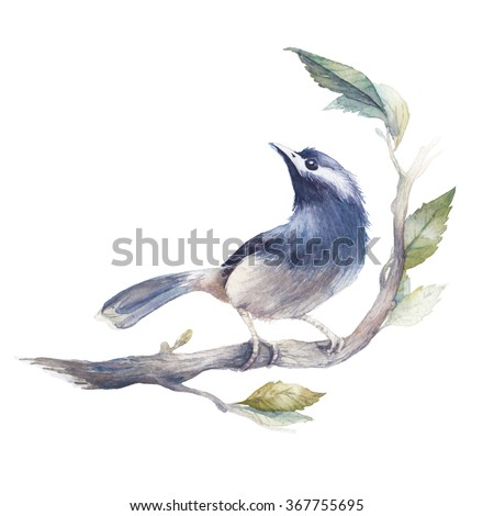 Watercolor bird illustration. Hand painted little bird on spring tree branch with green leaves isolated on white background. Botanical illustration - stock photo