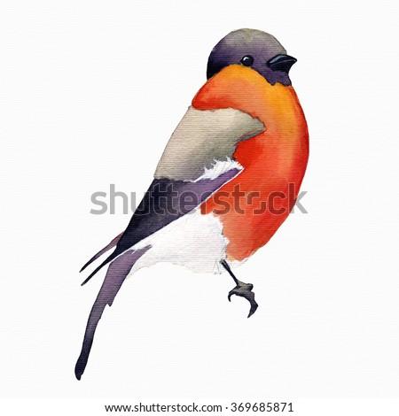Watercolor bird.Invitation card with bright watercolor bird. Watercolor wildlife natural winter Christmas robin bird. Watercolor painted bird - stock photo