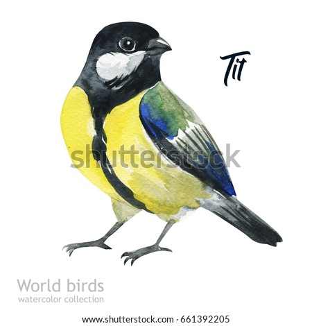 Watercolor bird of isolated illustration on a white background. Natural wildlife collection. Tit