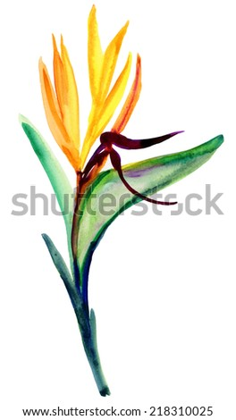 watercolor bird of paradise flower isolated - stock photo