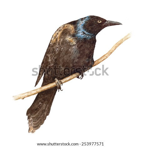 Watercolor black raven sitting on the branch. - stock photo