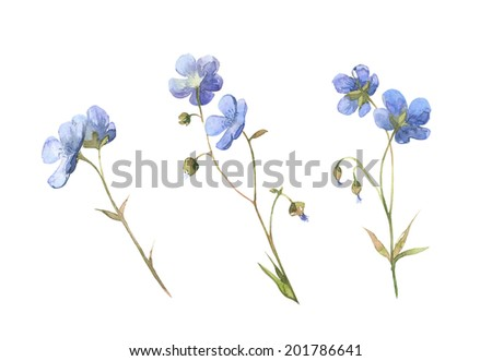 Watercolor blue little meadow flowers set  - stock photo