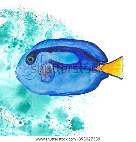 Watercolor Blue Tang Fish. Isolated on water background. Colorful hand draw fish. - stock photo