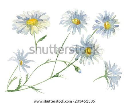 Watercolor chamomile flower set - stock photo
