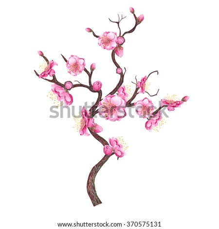 Watercolor Cherry, Plum, Peach blossom, isolated on white background. Chinese New Year Symbol. Postcard, poster & textile design. Hand drawn illustration. - stock photo
