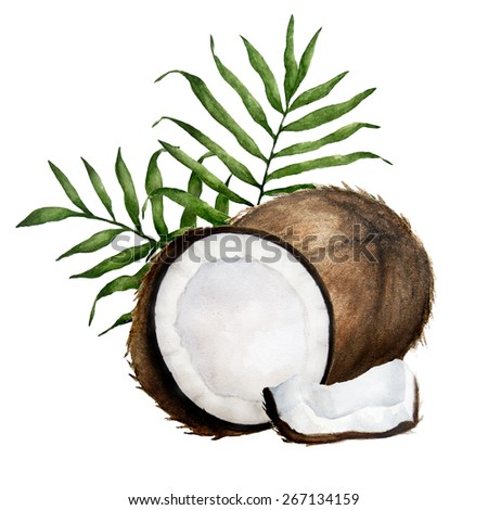 Watercolor coconuts with tropical leaves. Isolated on white.  - stock photo