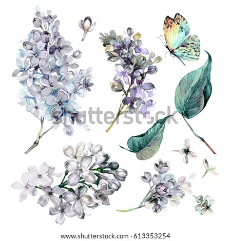 Watercolor collection white lilac flowers leaves stock illustration watercolor collection of white lilac flowers leaves and butterfly isolated on white background botanical mightylinksfo