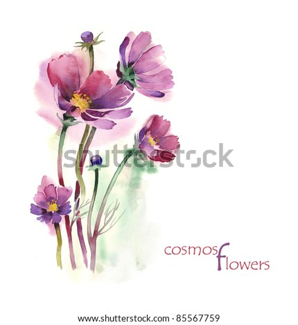 Watercolor -Cosmos flowers-, artist Marina Grau - stock photo