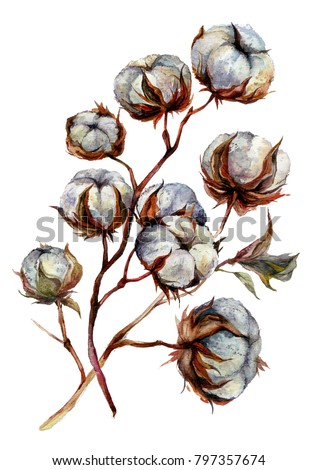 Watercolor Cotton Plant Isolated On White Drawing Of Bolls Rustic Floral Wedding Arrangement
