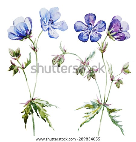 watercolor delicate blue flowers set isolated object, card - stock photo