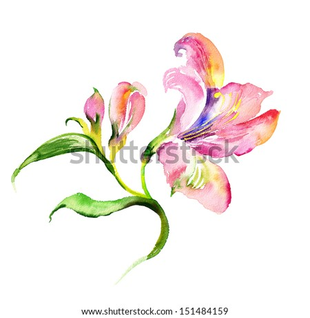 Watercolor delicate lily - stock photo