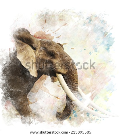 Watercolor Digital Painting Of  Elephant - stock photo