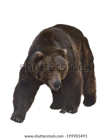 Watercolor Digital Painting Of  Grizzly Bear Isolated On White Background - stock photo