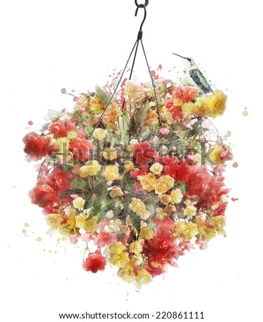 Watercolor Digital Painting Of Hanging Basket With Begonia Flowers - stock photo