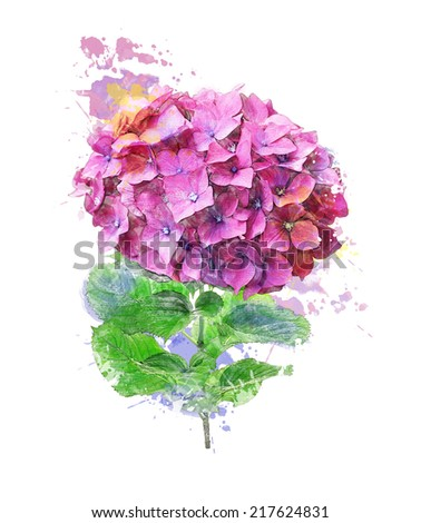 Watercolor Digital Painting Of Hydrangea Flower - stock photo