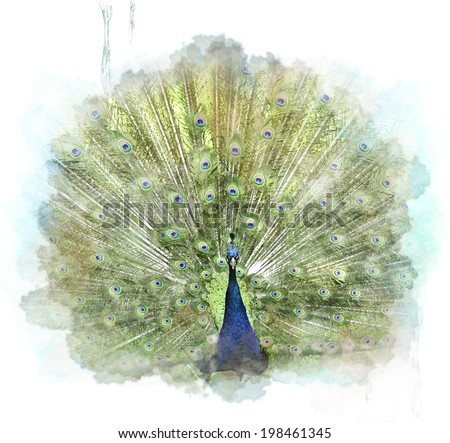 Watercolor Digital Painting Of Peacock - stock photo