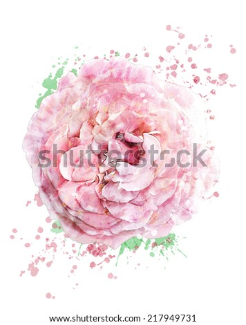 Watercolor Digital Painting Of  Pink Rose - stock photo