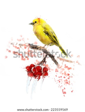 Watercolor Digital Painting Of Yellow Bird And Berries - stock photo