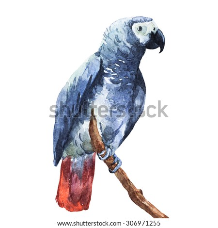 watercolor drawing isolated bird parrot Jaco