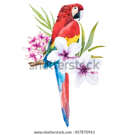 watercolor drawing isolated, trendy print with a parrot cockatoo palm leaves and flowers of hibiscus, tropical illustration - stock photo