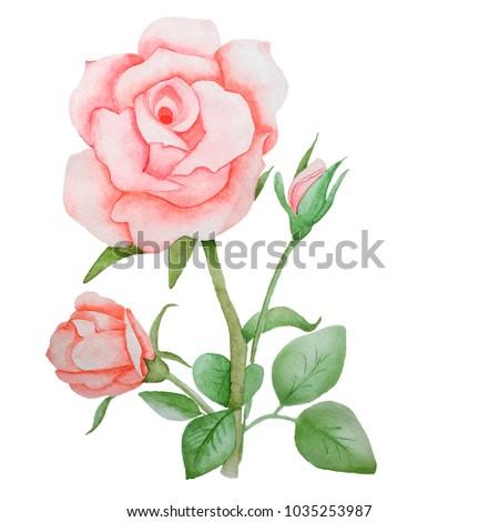 Watercolor Drawings Roses Floral Arrangements Templates Stock ...