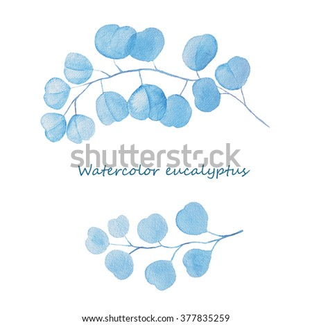 Watercolor eucalyptus. Leaves and branches. Hand painted watercolor illustration with eucalyptus branch. - stock photo