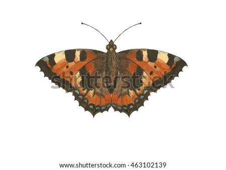 Watercolor European Small Tortoiseshell butterfly hand drawn illustration on white background