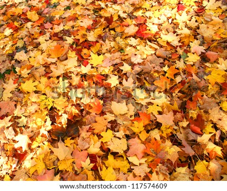 Watercolor Fall Leaves - stock photo