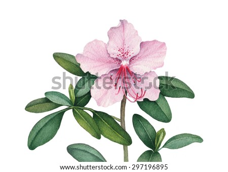 Watercolor flower illustration - stock photo