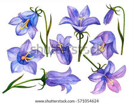 Watercolor flower set hand drawn illustration stock illustration watercolor flower set hand drawn illustration of bluebell flowers isolated on a white background mightylinksfo