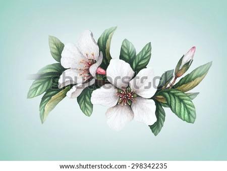 Watercolor flowers illustration - stock photo