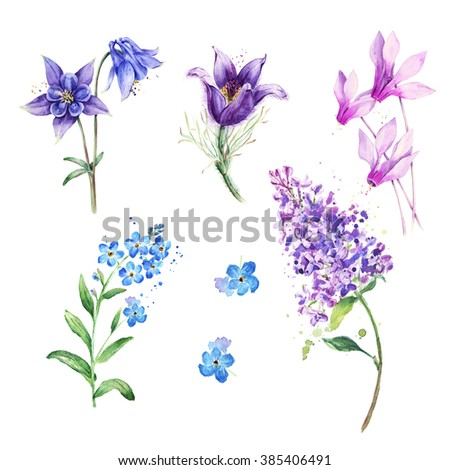Watercolor flowers isolated. Hand drawn floral set  - stock photo