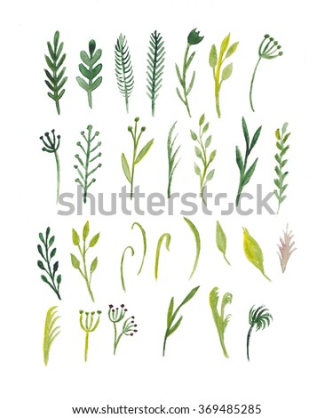 Watercolor flowers, plants, grass, tree branches. Watercolor floral elements collection. - stock photo