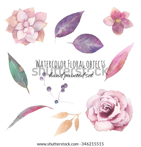 Watercolor flowers set. Hand painted purple leaves, pink flowers: rose, hellebore, succulent, wild berries branch isolated on white background. Floral artistic collection  - stock photo