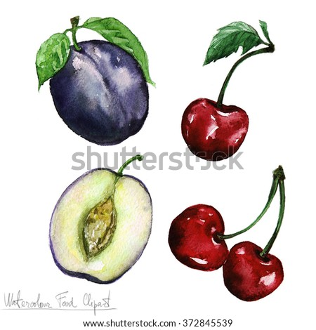 Watercolor Food Clipart - Plum and Cheery - stock photo
