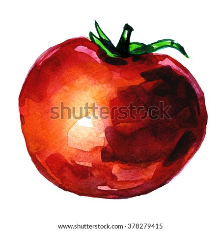 Watercolor freehand illustration of big ripe red fresh tomato vegetable on white background artistic artwork kitchen decor postcard print fabric textile