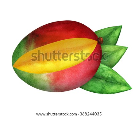 Watercolor fresh mango fruit with cut piece, green leaves closeup isolated on white background. Hand painting on paper. Art design element - stock photo