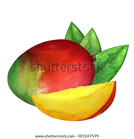 Watercolor fresh ripe mango fruit, slice, green leaves closeup isolated on white background. Hand painting on paper   - stock photo