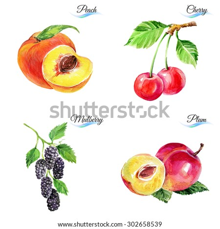 Watercolor fruits and berries isolated on white background for design - stock photo