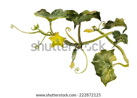 Watercolor garden vignette cucumbertwig with leaves, flowers and small fruit original illustration - stock photo