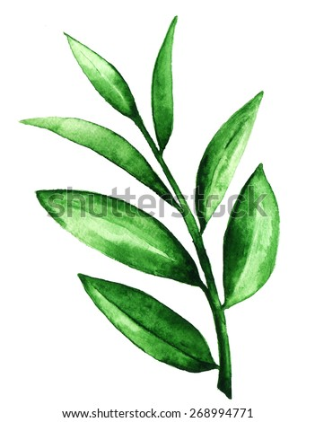 tea leaves essay Below is an essay on tea leaves from anti essays, your source for research papers, essays, and term paper examples tea is made from the young leaves andbuds of the tea plant tea leaves are rich incaffeine (an alkaloid.