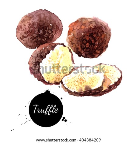 Watercolor hand drawn black truffles. Isolated eco natural food illustration on white background - stock photo