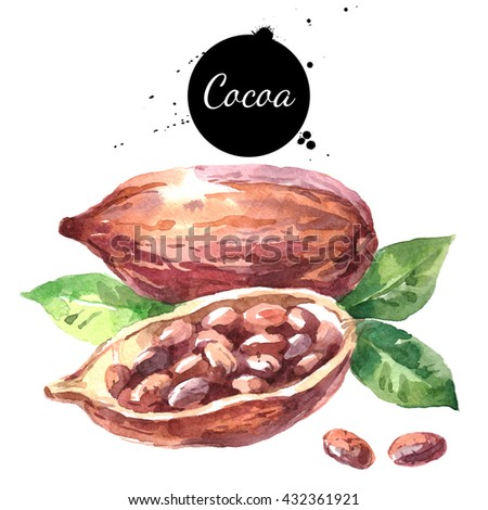 Watercolor hand drawn cocoa pod. Isolated organic natural eco illustration on white background